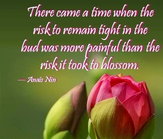 risk blossoming quote